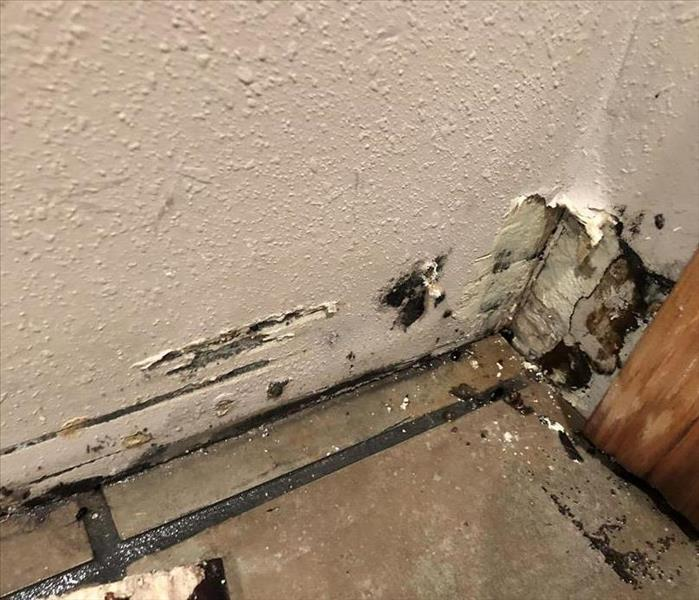 Mold Remediation When to Call for Mold Remediation